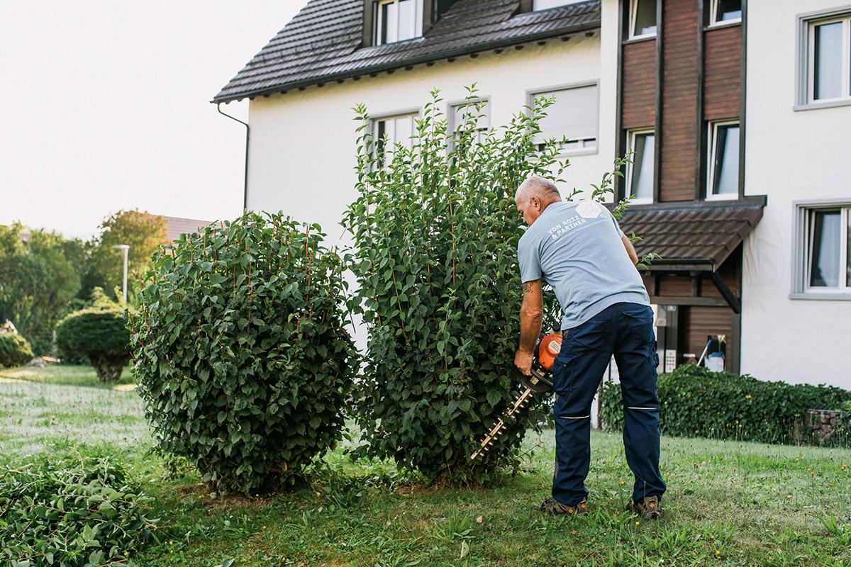 Pflege und Verschnitt von Pflanzen und Bäumen in Zürich, Luzern, St. Gallen, Thurgau